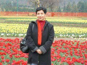 Kashmir tulips